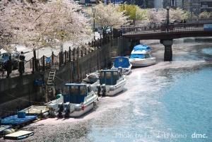川岸の桜 大岡川
