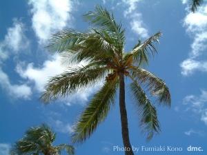 ハワイ 椰子の樹