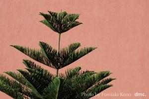 南洋杉 赤い壁