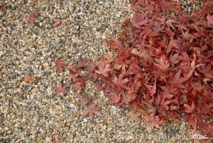山紅葉 落葉