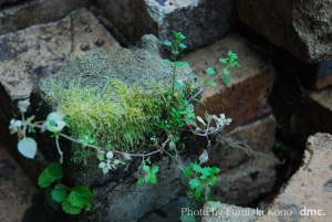 石付の苔と草
