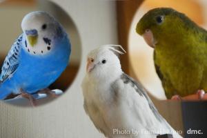耳を傾ける小鳥たち