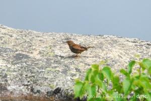 高山の赤い鳥