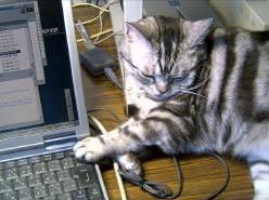 Deleteキーを押す猫