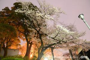 野毛 夜桜